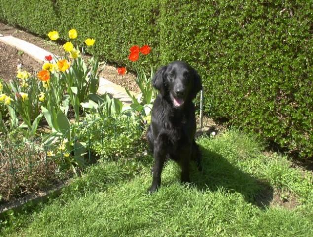 Pomlad 2005 - foto