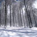 bukov gozd ob vznožju Blegoša