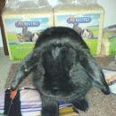 Mali zajček