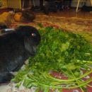 ...zato mora Bunny pojest...