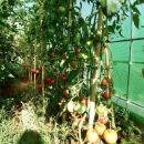 Rastlinjak