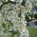 pomlad 07