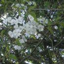pomlad je tu