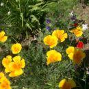 Natašine rože