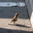 Jaz sem tak lep postaven ptiček!:))