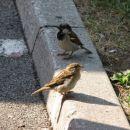 Ptiček se sonči!:)