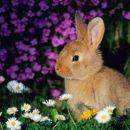 lovam pomlad