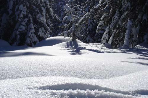 Zima - foto
