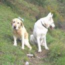 Heki z labradorcemHudijem :)