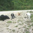 Ena skupinska (od leve proti desni: Bella, Dona, Hudi, Hektor)