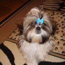Daisy 4 mes
