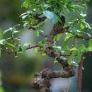 moj notranji bonsaj