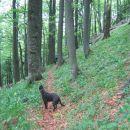 Kočevski hribčki (Krokar, Krempa, Fridrihštaj