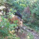 Creda konjev, ki se je vračala v dolino