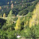 Gozdiček