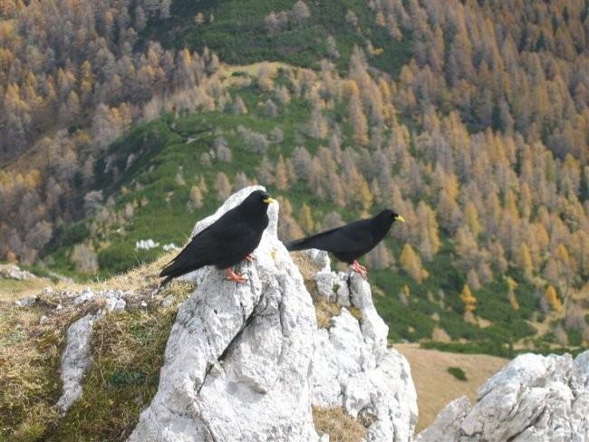 Viševnik (2050m) in Mali Draški vrh (2132m 2 - foto povečava