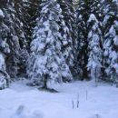Na Pokljuki je že več kot 20 cm snega
