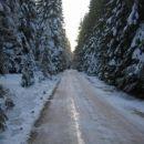 Cesta, ki vodi do Medvedje konte II