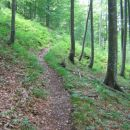 Lovks pot proti lovski koči pod Kamniškim dedcem