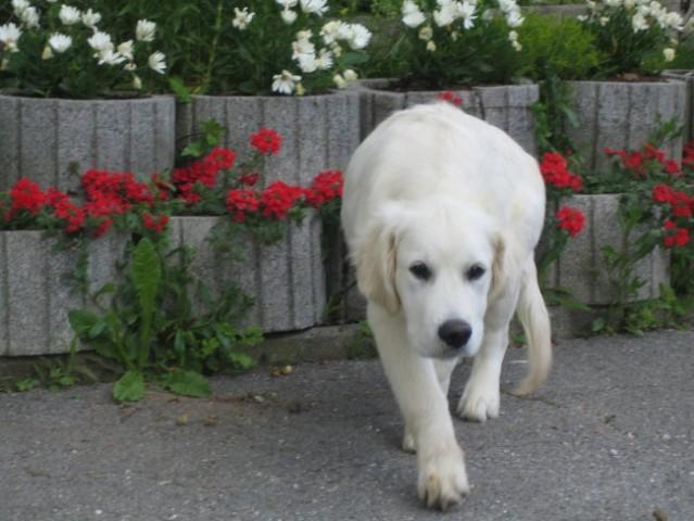 Giorgio-01.06.2006 - foto