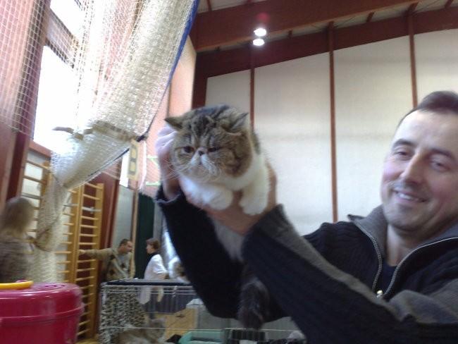 Mačja razstava LJ. 08 - foto povečava