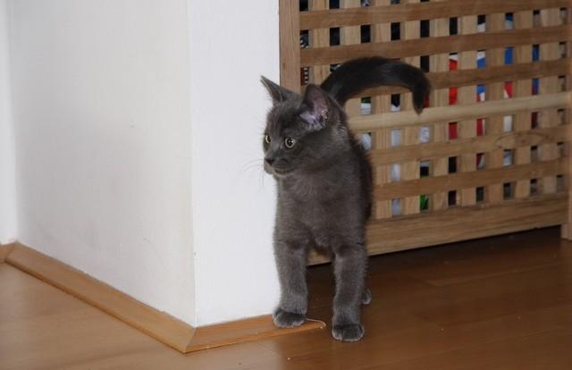 Nitka ima nov dom