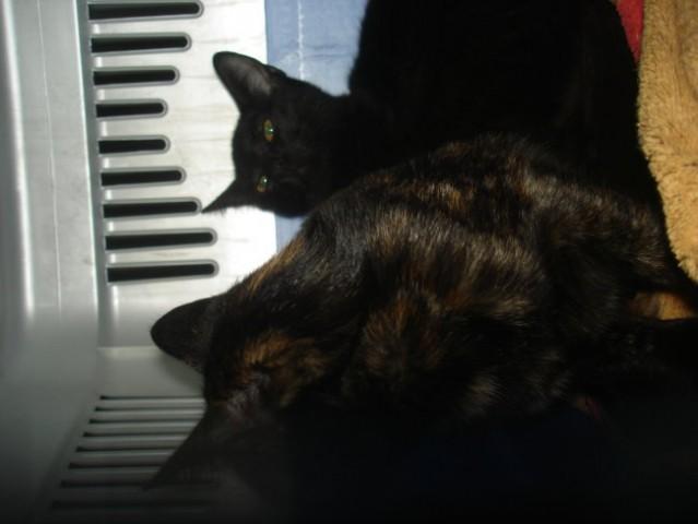 Punky in Miša - foto