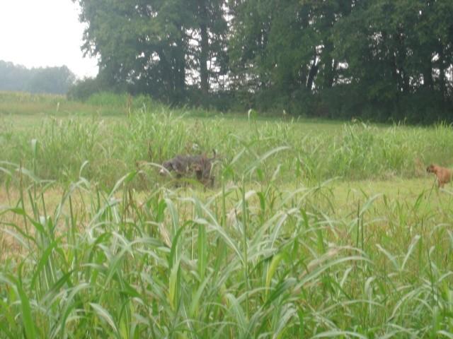 Zajčja - foto