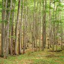 Bukova šuma blizu Medvjeđih vrata