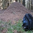 Ogromno mravljišče 1,2m krat 2m
