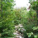 Rov skozi grmovje...
