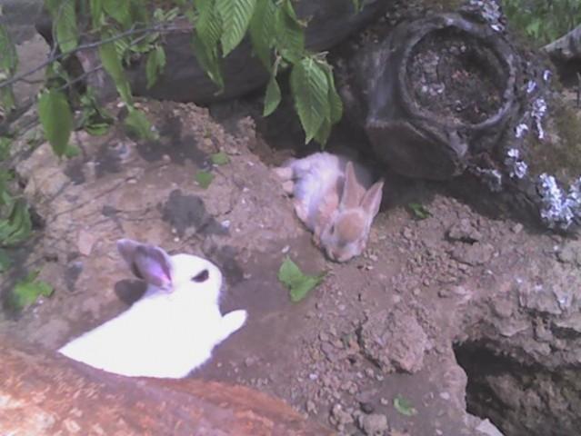 Zajčki, taki ko so tut pr nas =)