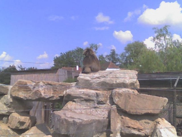 Opica ki ni in ni hotla lepo pozirat =)