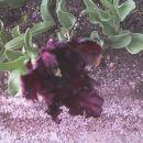 malo čudno zafrlen, drgač pa ful lep tulipan =)