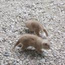 Šapko in Repko ( Repko je sedaj doma na Bledu )