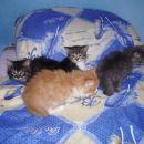 Kody, Tiger, Silver in Aslan