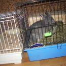 Lola v kletki
