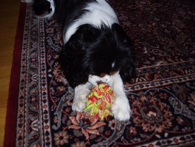 Iris&žoga - foto