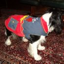 iris v Snoopy plaščku