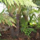 Kew Gardens - Evolution House