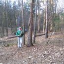 Zlato in the šuma