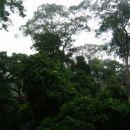 zelo majhna drevesa...