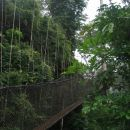canopy walkway, kakum rainforest... sej sploh ni daleč do tal :D
