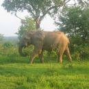 slonček... ki niti ni tako majhen kot zgleda :D