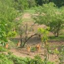 čreda antilop, ki smo jo splašili na našem foot safariju...