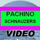 Schnauzers VIDEO