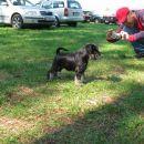Pachino Penelope ostenjena 07.07.2007