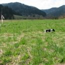 coursing pomlad 2006