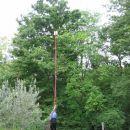 roj se je ustavu zelo visoko na drevesu