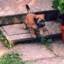 Kondor (leglo 2004) v Avstriji